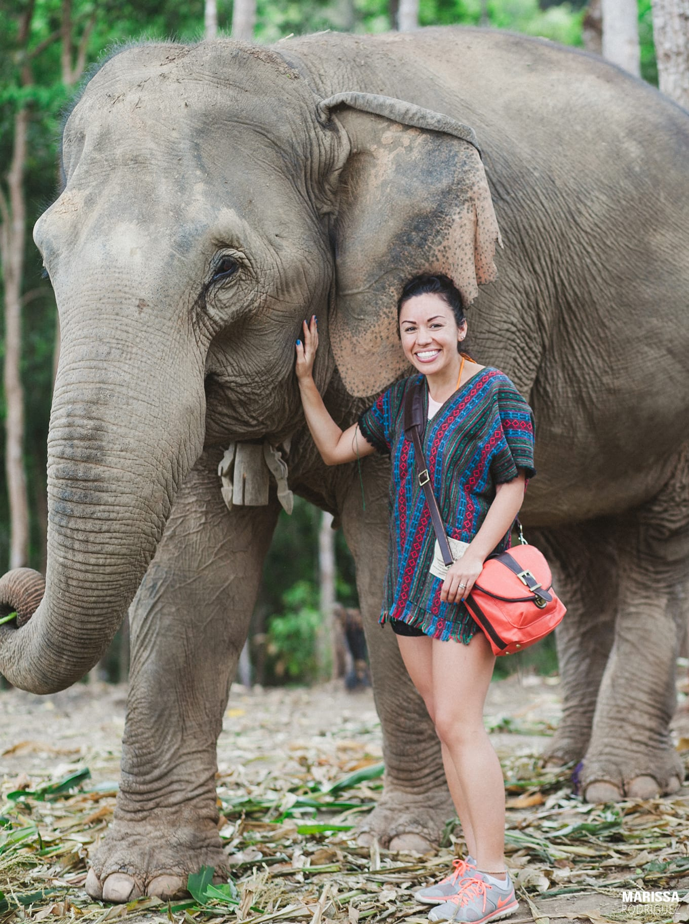 a day with elephants_chiang mai