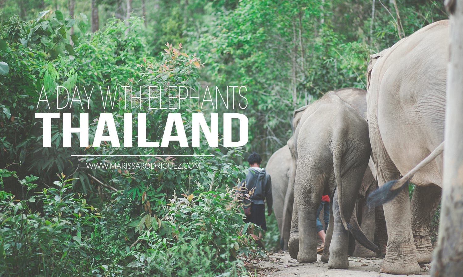 a day with elephants_thailand_omg