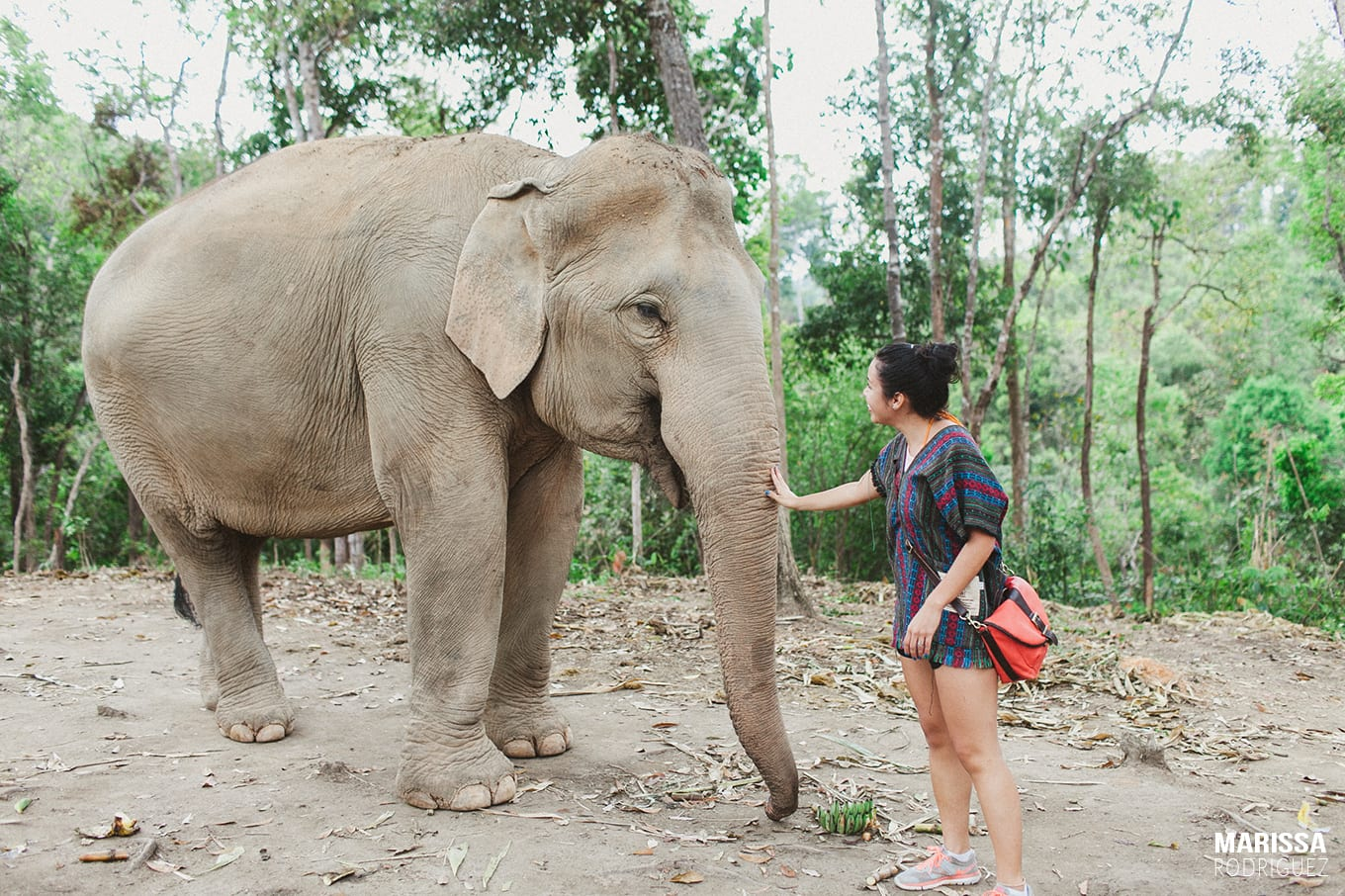 elephants in thailand_my favorite things