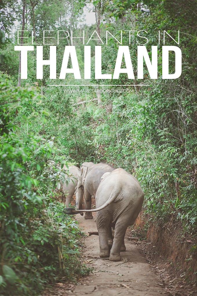 elephants in thailand_sanctuary
