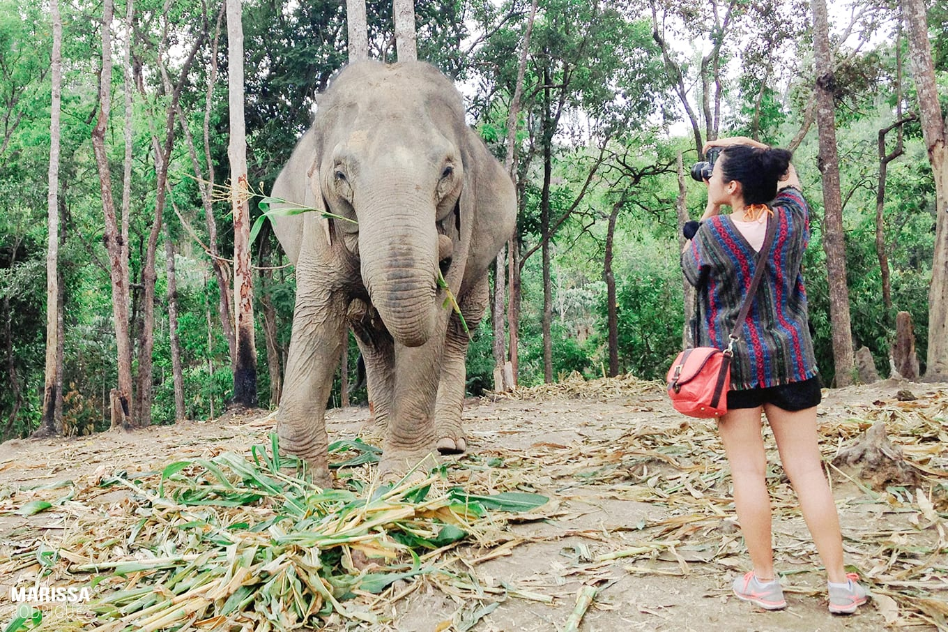 photographing elephants_dream come true_ thailand_animal sanctuary