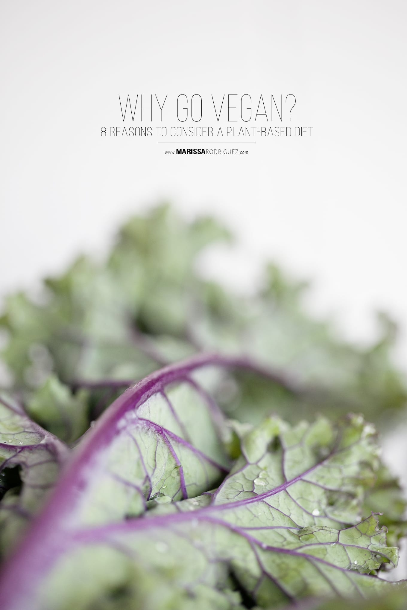 should i go plant based- why go vegan