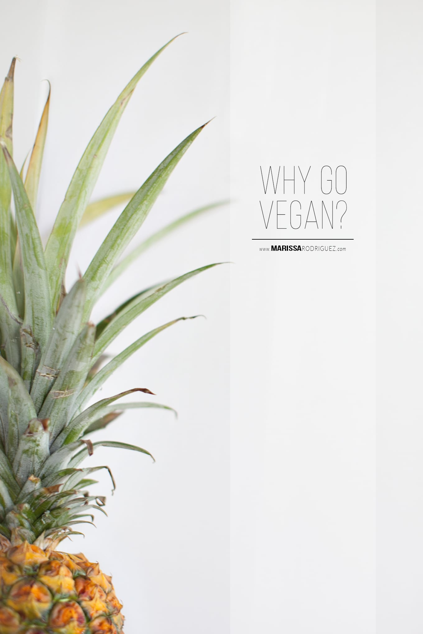 should i go vegan? reasons to go vegan
