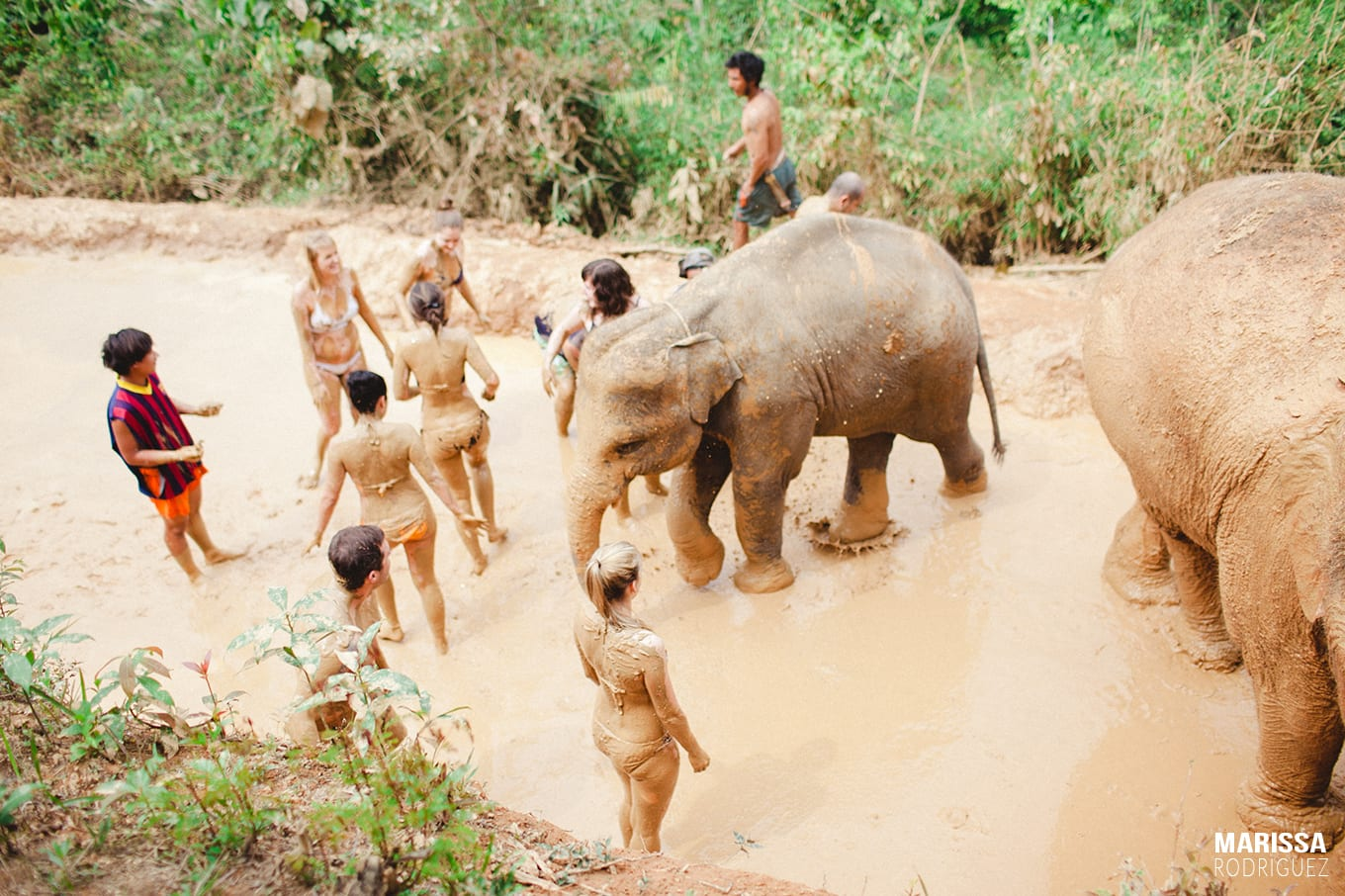 ultimate elephant mud bath_travel to thailand_wild and free