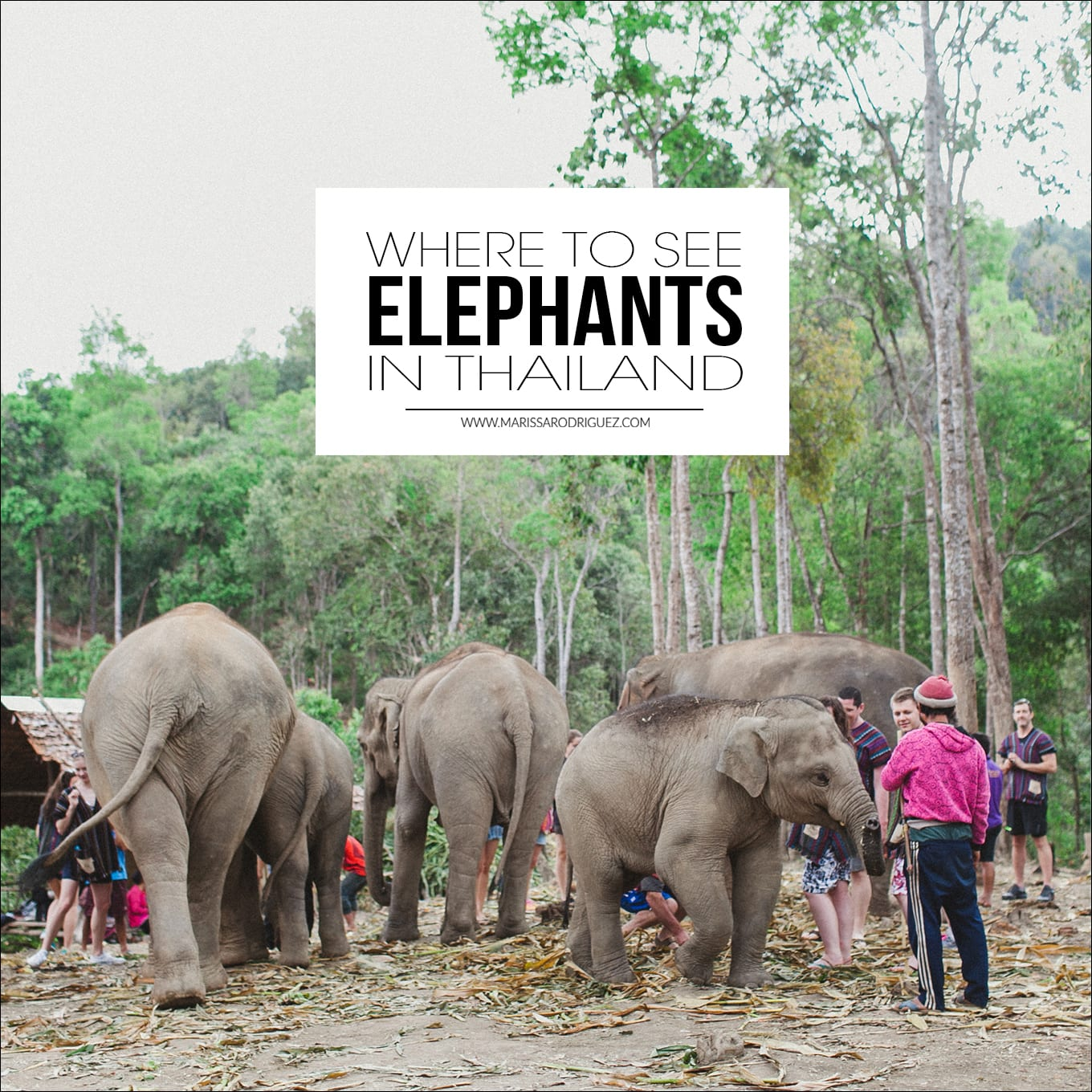 where to see elephants in thailand_ethical