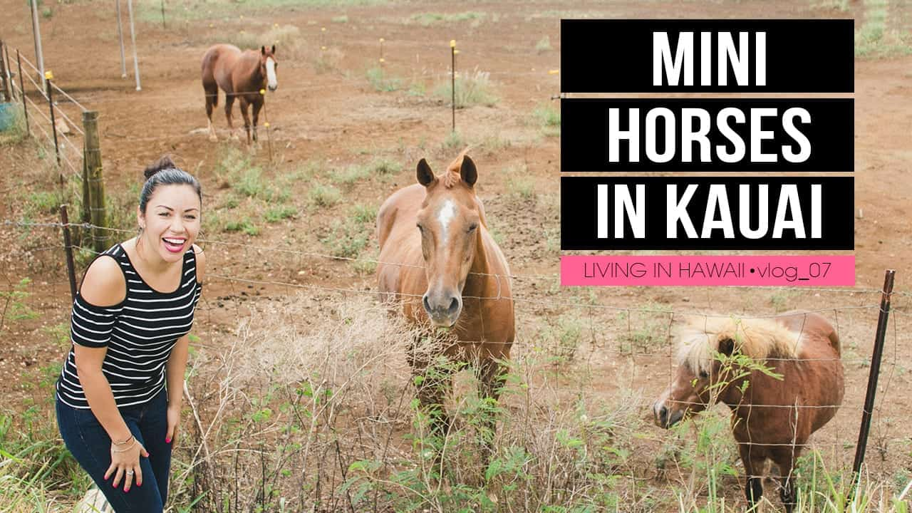 MINI HORSES IN KAUAI! LIVING IN HAWAII VLOG 007.